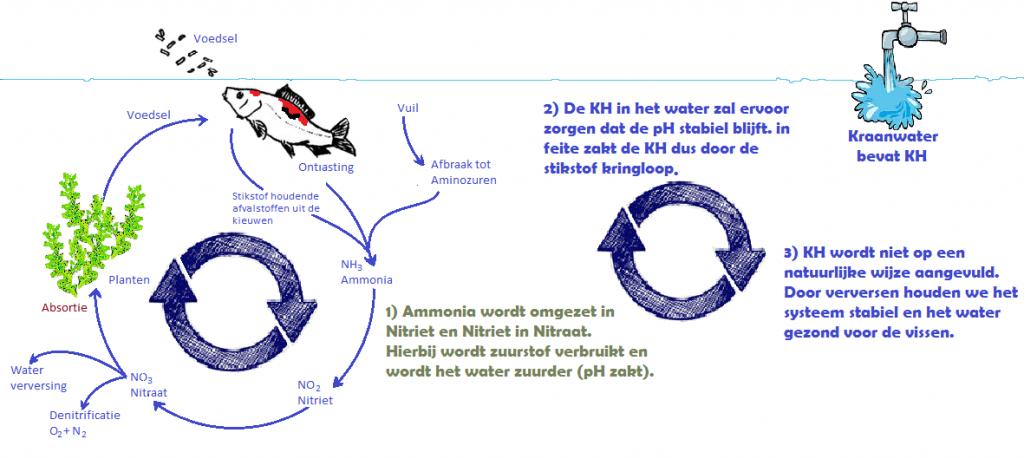 Adviesgroep Koi en vijver:Stikstofkringloop