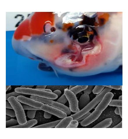 Bacterieproblemen kunnen wij in beeld brengen