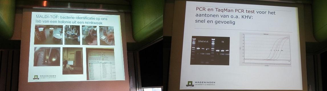 Adviesgroep Koi en vijver: Dia's uit de presentatie: Bacteriekweek - Test voor o.a. KHV