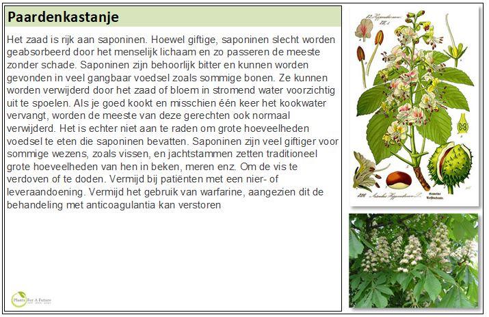 Adviesgroep Koi en Vijver - Aesculus Hippocastanum