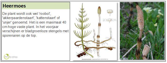 De plant wordt ook wel 'roobol', 'akkerpaardenstaart', 'kattenstaart' of 'unjer' genoemd. Het is een maximaal 40 cm hoge vaste plant. In het voorjaar verschijnen er bladgroenloze stengels met sporenaren op de top.