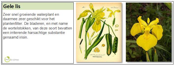 Zeer snel groeiende waterplant en daarmee zeer geschikt voor het plantenfilter. De bladeren, en met name de wortelstokken, van deze soort bevatten een irriterende harsachtige substantie genaamd irisin.