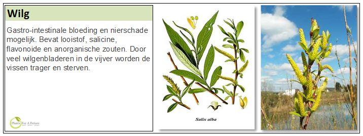 Adviesgroep Koi en vijver - Salix Alba