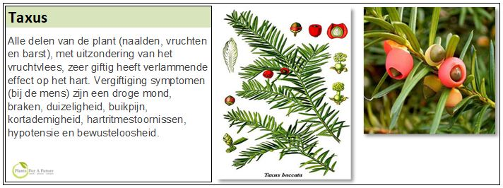 Adviesgroep Koi en vijver - Taxus Baccata